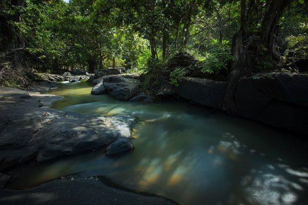 ป่าไม้อุทยานแห่งชาติน้ำตกตาดโตน